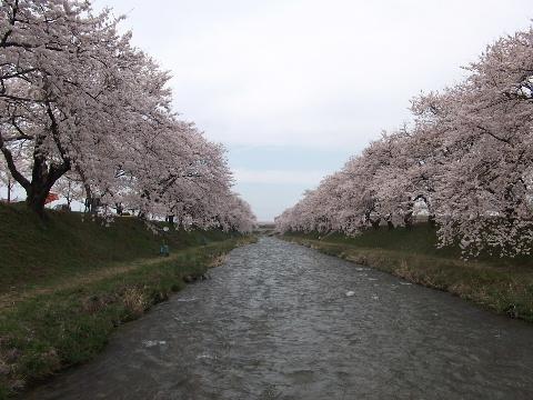 hunagawa0418-2.jpg