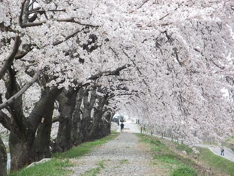 hunagawa0418-3.jpg