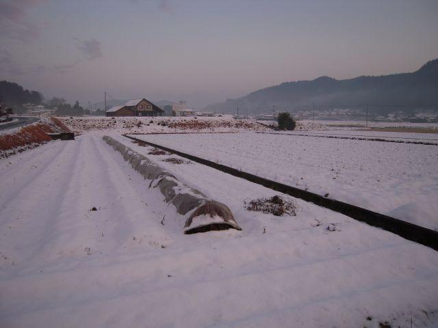 美作の雪30_1
