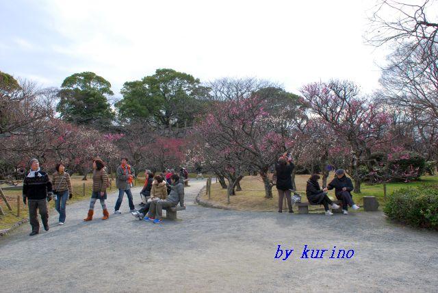 福岡・舞鶴公園の梅
