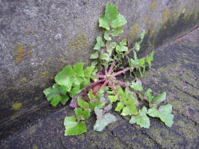 道路と壁の隙間から直角に伸びる葉
