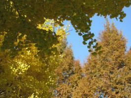 黄葉・紅葉と青空