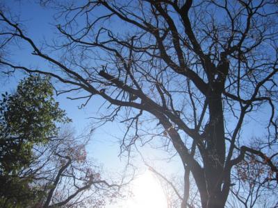 葉を落として、春を待つ