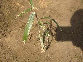 地面から笹の葉