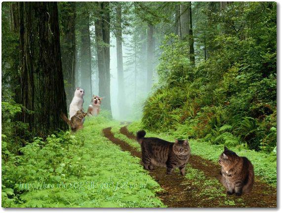 森に行く?♪