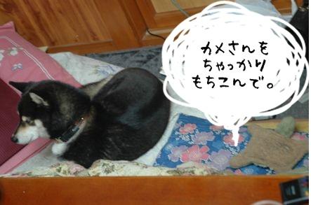 DSC_0014_20110208180017.jpg