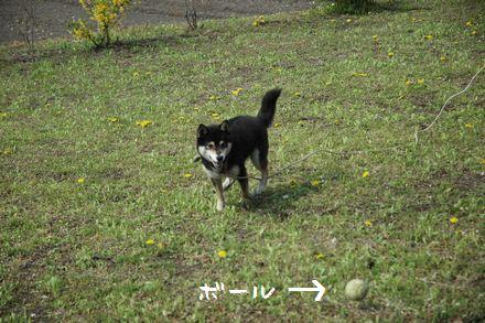 DSC_0108_20100515025146.jpg