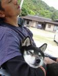 吠え疲れて寝る犬と、呑み疲れて寝る男