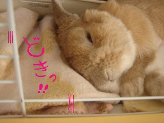 魅惑の寝顔
