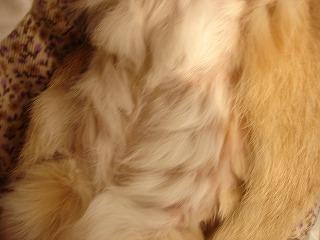 ダンプの毛