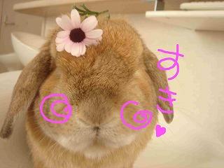 花のせダンプ!