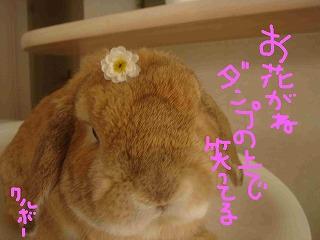 花のせダンプ♪