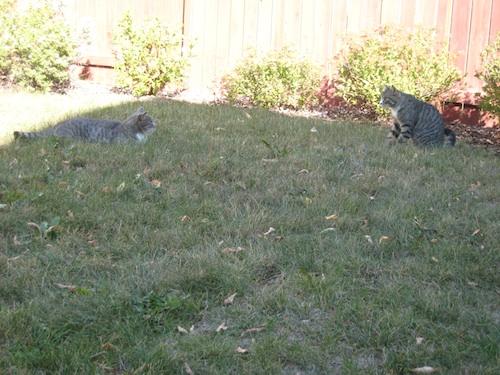ティガーとルーシー