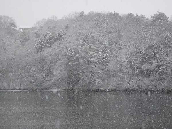 雪 005