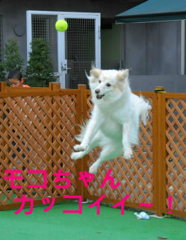 かっこえ~!