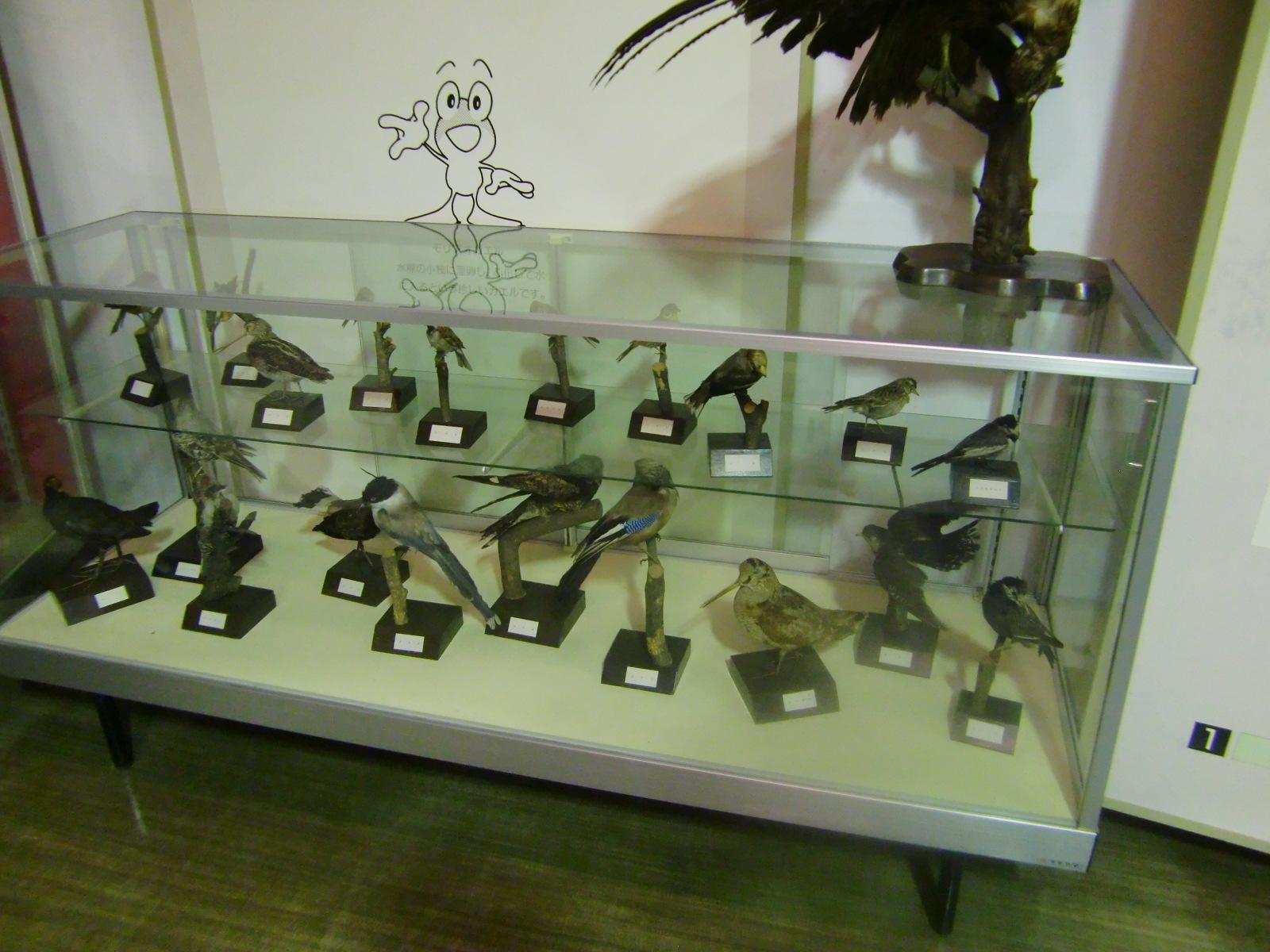 草津温泉の動物の剥製