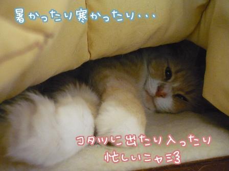 2010-05-12-01.jpg
