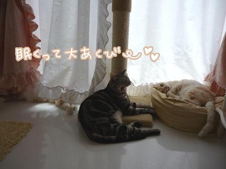 2011-02-05-04.jpg