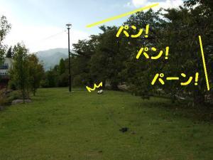 2009104-2.jpg
