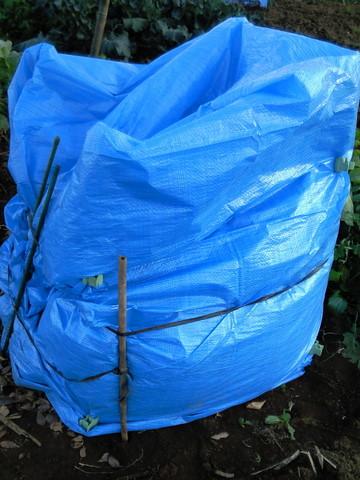 落ち葉堆肥作り3