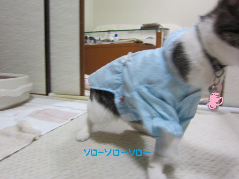 IMG_2177繧ス繝ュ3_convert_20110408173818