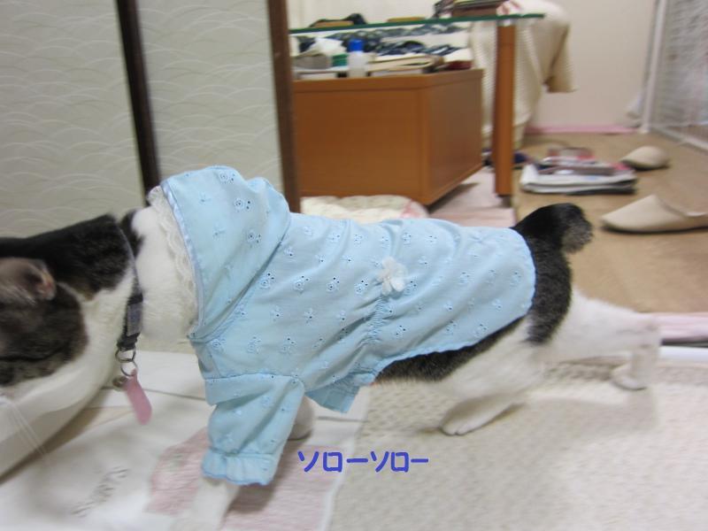 IMG_2172繧ス繝ュ繝シ_convert_20110408173746