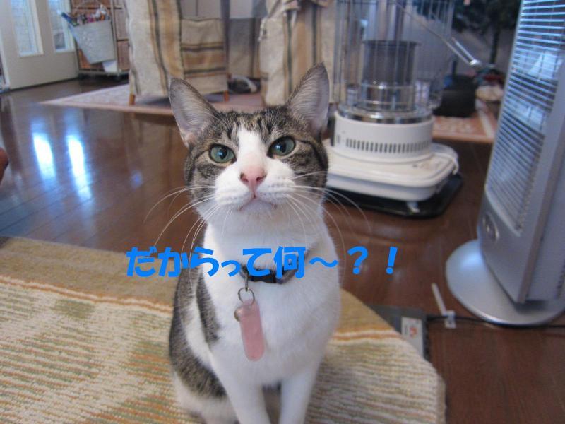 IMG_1467縺ェ縺ォ・歙convert_20110427164614
