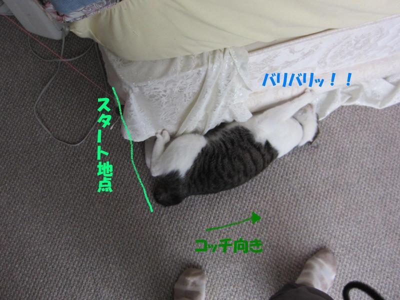 IMG_2973繧ケ繧ソ繝シ繝・convert_20110501170646