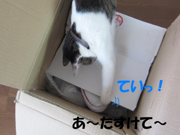 IMG_3669_convert_20110519132449ジョーズ