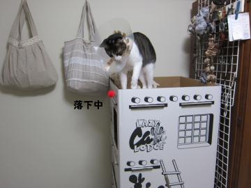 IMG_4075關ス荳倶クュ_convert_20110604001355