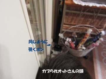 IMG_4113髫咎俣繧定ヲ励¥莠御ココ_convert_20110607130233