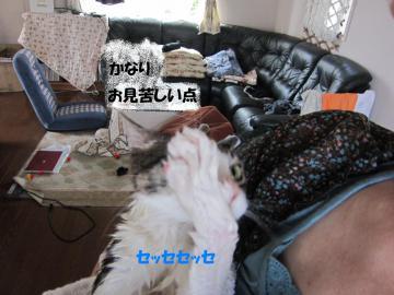 IMG_4356縺帙▲縺帙○縺」縺媽convert_20110611213523