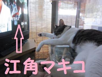IMG_4934豎溯ァ偵・繧ュ繧ウ_convert_20110706222552江角マキコ