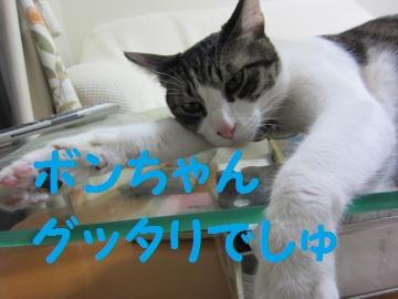 IMG_5066_convert_20110713212305ぐったり