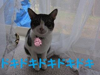 IMG_2420bonドキドキ