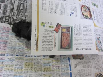 IMG_4959_convert_20110717005254.jpg