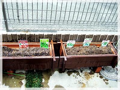 IMG_4106トマト、サラダ菜