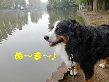 いつものお散歩公園~!