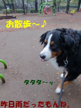 お散歩は楽しいね~!雨じゃないもん!