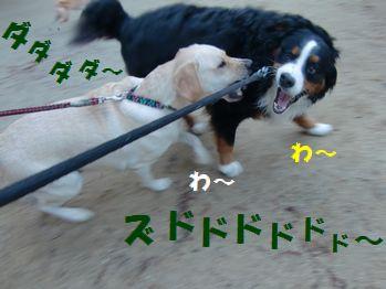 マロンちゃんとカプカプ~!