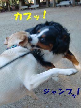 ジャンプしてカプッ!!