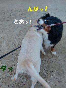 負けずにカプるもん!!