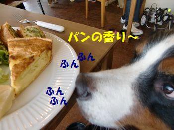 ぱんじゃない!?
