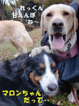 マロンちゃんだって甘えん坊さんじゃないか~!