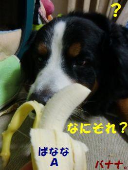 バナナ?食べられる??
