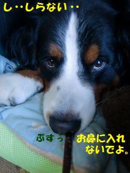 お鼻いれんの反対~!!