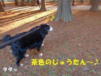 茶色のじゅうたん~!