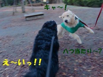 ベリーちゃんにも勝つっ!!