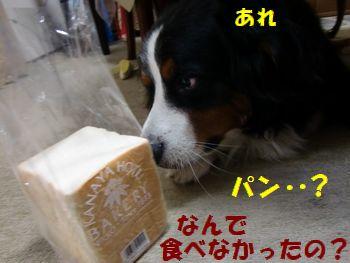 """パンあった!?うそ""""!?"""