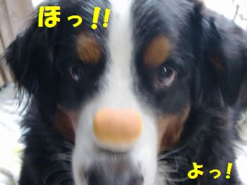 よっ!ほっ!とおぉ~!